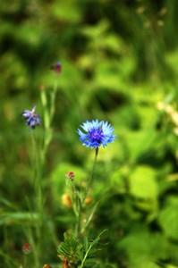 magas vérnyomás és búzavirág malko nugát legjobb hipertónia