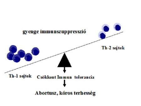 A Th1 és a Th2 sejtek megváltozott működése kóros terhességben