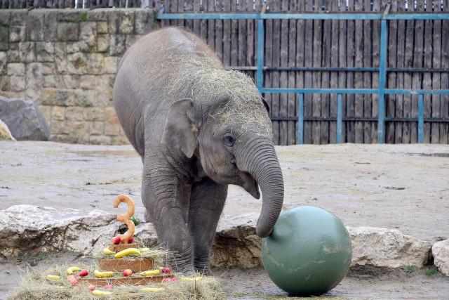 Arun a hároméves kiselefánt
