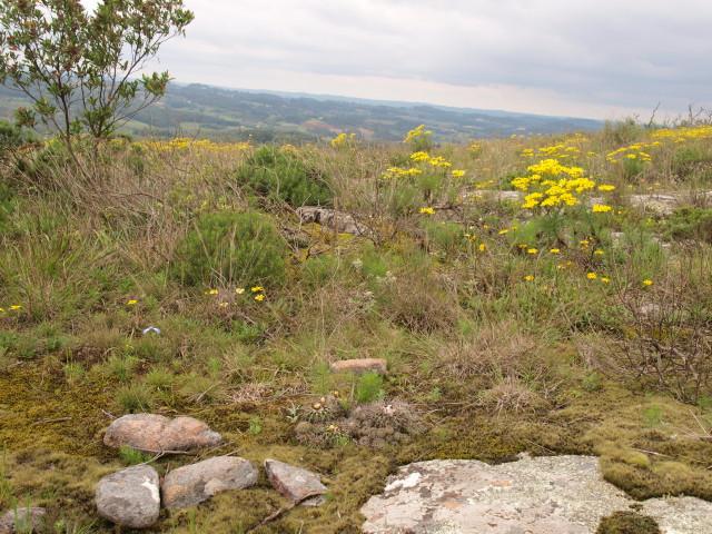 Brazília szukkulens növényvilága - őszi Kaktuszkiállítás és Vásár