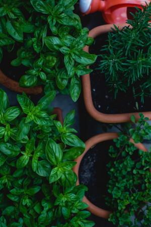 Gardenexpo 2019 - Fűszernövények