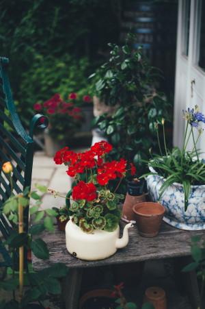Gardenexpo 2019 - Muskátli