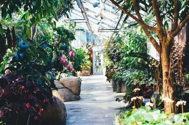 Gardenexpo 2019 - Vásárlás