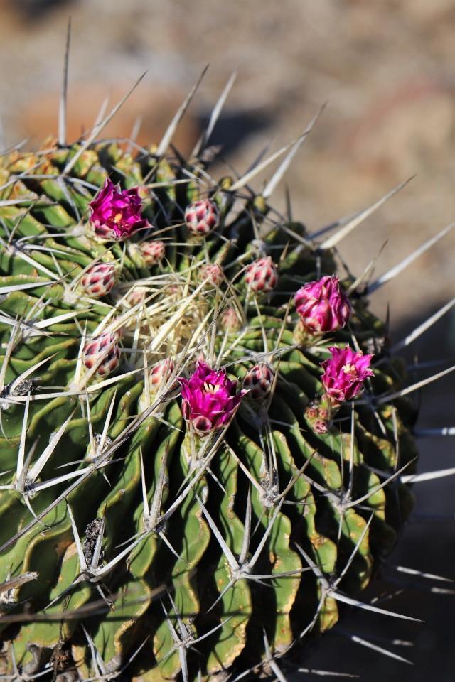 Mexikó szúrós csodái - tavaszi Országos Kaktuszkiállítás és Vásár