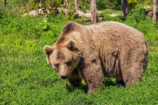 Medvepark
