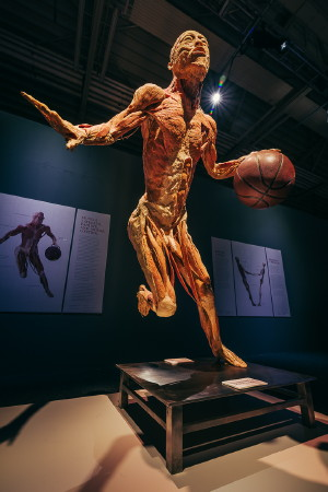 Body kiállítás