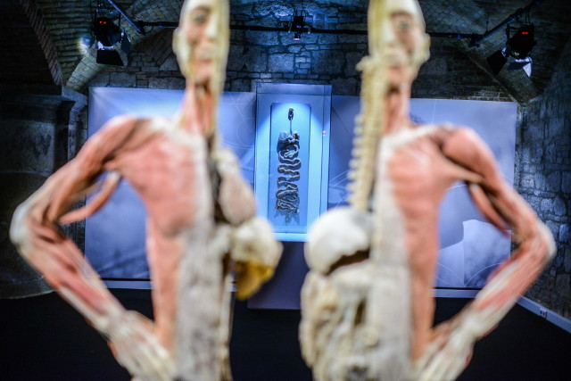 Body kiállítás számokban