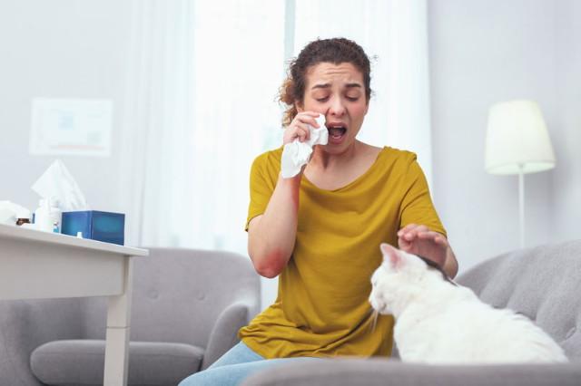 Cica allergia