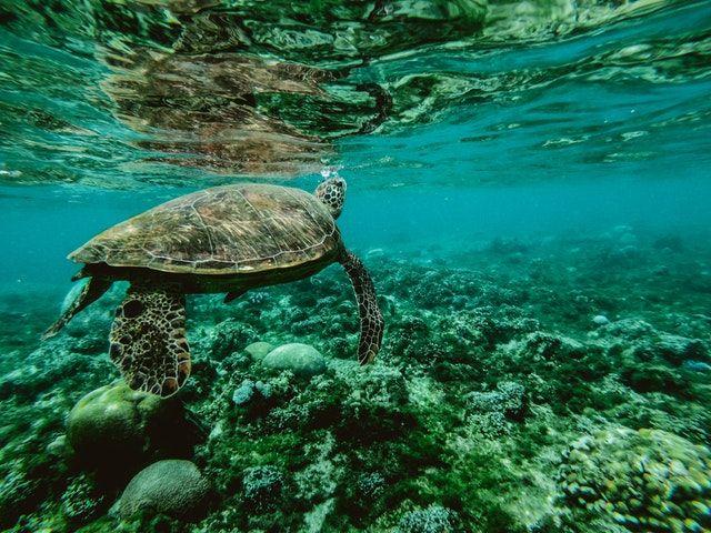 Teknős a vízben